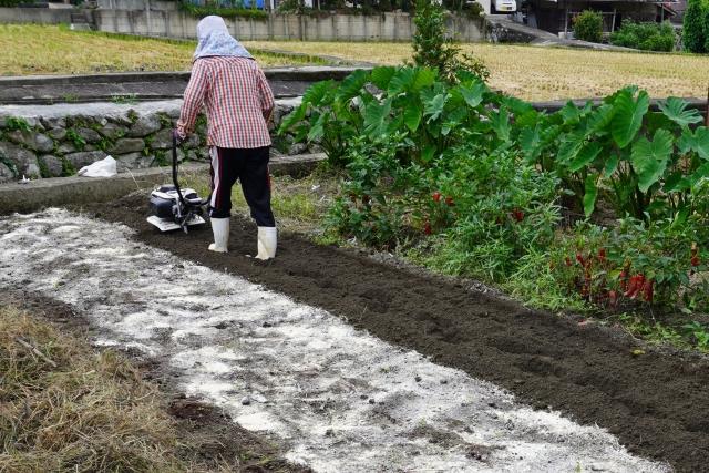農作業をしている女性